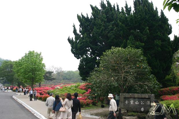 伊豆の小室山公園です